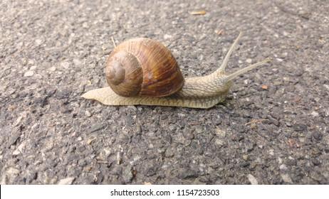 big beautiful slug