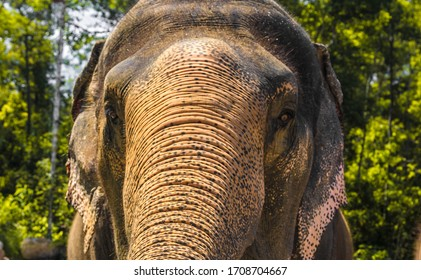 big, beautiful, strong elephant, under the bright sun. the elephant pulls the trunk and tries to reach back.