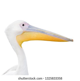 Big beautiful white pelican portrait isolated on white. Funny cute zoo bird. Pelican - large water bird on white