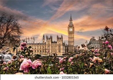 Big Ben, the Palace of Westminster in London, UK. View from a public garden with beautiful roses flowers.