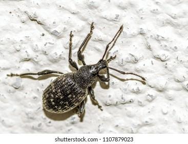 big black beetle on the wall