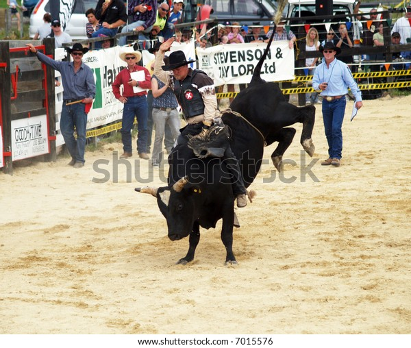 Big Black bull with a cowboy on his back