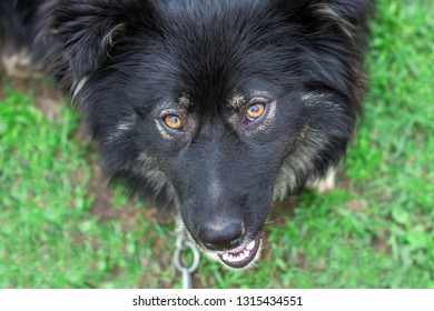 Big black dog expressive looks. Animal is looking for the owner. A dog on a chain without a home. Black watchdog looks up with hope in his eyes. Take animals from shelters