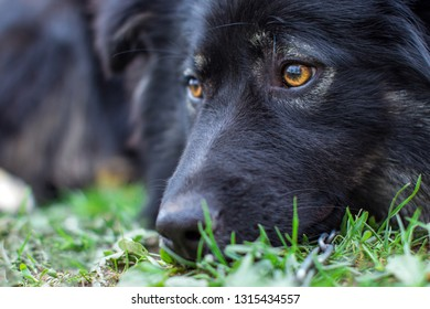 Big black dog sad looks. The protection of pet animals. Do not drop the Pets. The dog is sad for the owner. Take animals from a shelter. Watchdog  waiting for owner