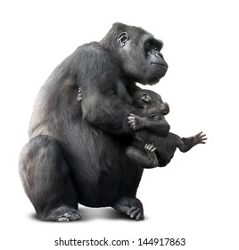 big black gorilla and her baby.isolated on white