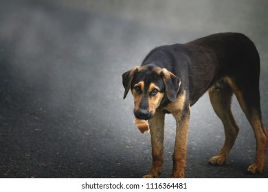 Big black hungry dog with a piece of bread in his mouth on the background of asphalt road and smoke.
