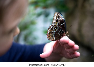 Big Blue Morpho Butterfly with closed wings sitting on a woman's hand while her little daughter is watching