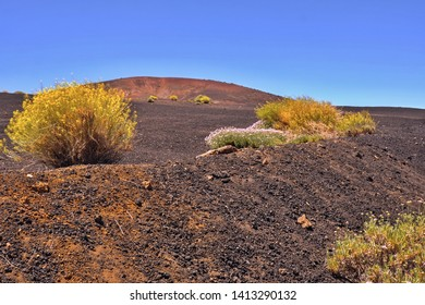 big blue-black lava and ash-field with blooming yellow Teide plants, in the national park Teide on Tenerife at 2400 m height, blue sky and sun, without humans