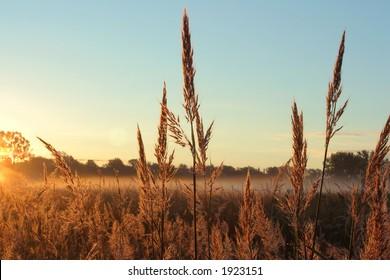 Big Bluestem tall grass prairie,  Homestead National Monument of America, Beatrice, Nebraska