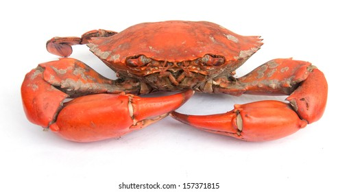 Big Boiled crab isolated on white