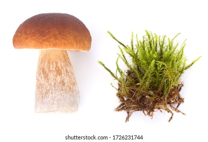 big boletus edulis isolated on white background in forest moss close up