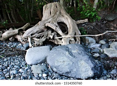 Big boulders pebble rock beach driftwood tree stump rootstock color weathered wood gray brown green background