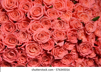 Big bouquet 101 pink roses background