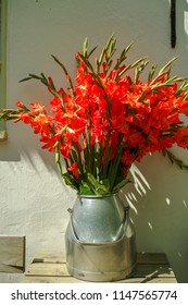 Big bouquet of red gladiolus flowers in old milk can on table outdoor in sunny lights, beautiful decoration near white house wall