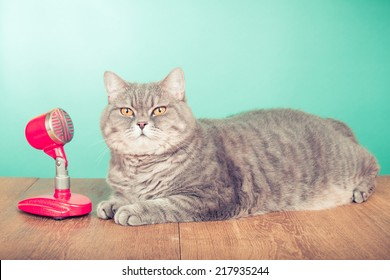 Big British Shorthair cat near retro microphone on wooden table front mint green background