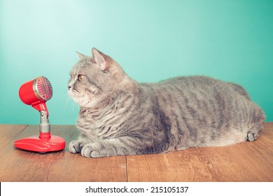 Big British Shorthair cat with retro microphone on wooden table front mint green background