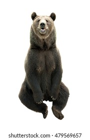 Big brown bear isolated on white background, predator