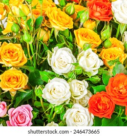 Big bunch of beautiful flowers. A lot of multicolored roses - floral background