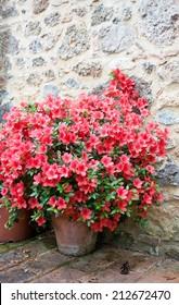 Big bush of an azalea in the yard near a stone wall of the house