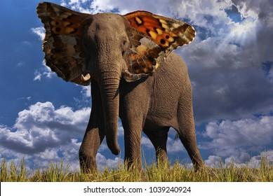 Big Butterfly Ears