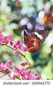 Big butterfly on a tropical flower