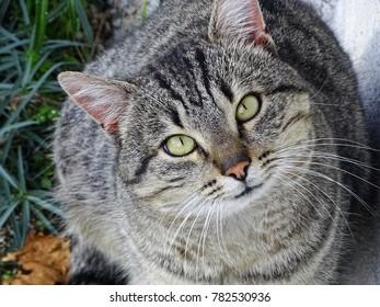 Big Cat, fat Cat