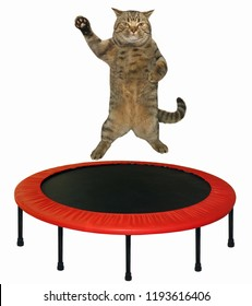 The big cat is jumping on a red trampoline. White background.