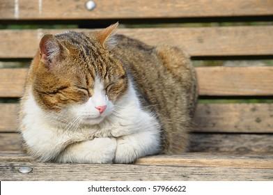 Big cat sleeping on garden bench