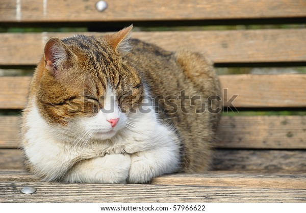 Fine Big Cat Sleeping On Garden Bench Stock Photo Edit Now 57966622 Inzonedesignstudio Interior Chair Design Inzonedesignstudiocom