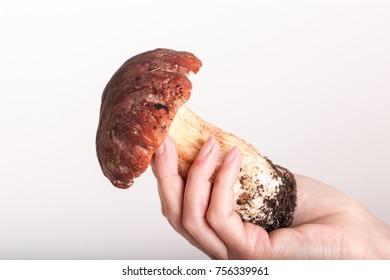 big cepe in a hand close up