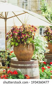 Big ceramic vase with growing various plants. Mixed potted flowers on summer town street. Coleus and white Scaevolas aemula flower in large pot on sunny spring terrace