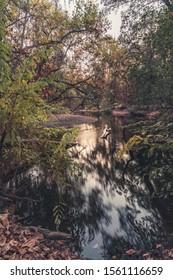 Big Chico Creek in Autumn, Chico California.