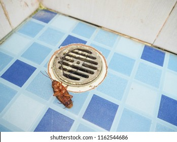 Big cockroach dead on the floor in toilet by pesticides.