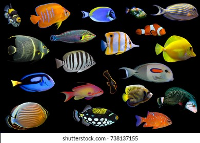 Big collection of saltwater fishes