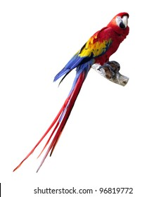 Big Colorful Macaw Parrot Isolated On White