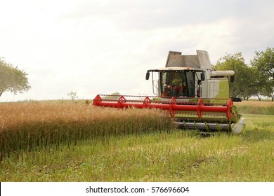 Big combine on headland, harvest of oilseed rape for bio fuel, field fertilized with manure, frontal perspective, hot sunny summer day, white background, conventional agriculture