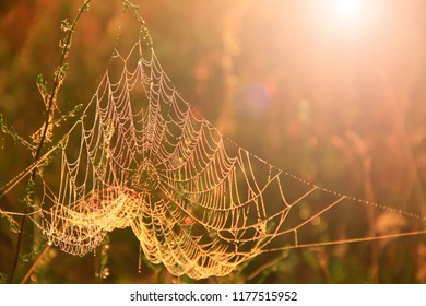 Big cowweb among blades in field in sun light at dawn. Spider's web in summer field in sun rays at dawn. Summer field at dawn. Droplets of dew on grass at dawn. Summer field in sepia