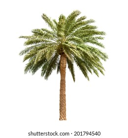 Dates palm tree fruit Illustrations and Stock Art. 219 Dates palm tree fruit  illustration and vector EPS clipart graphics available to search from  thousands of royalty free stock clip art designers.