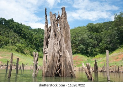 big dead wood in balahala forest - Balahala forest is most perfectly forest in South of Thailand