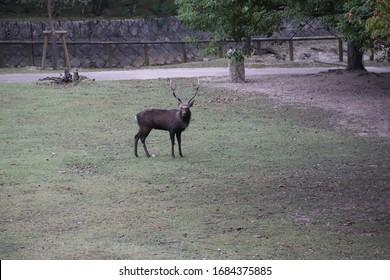 Big Dee im Nara Park, Japan