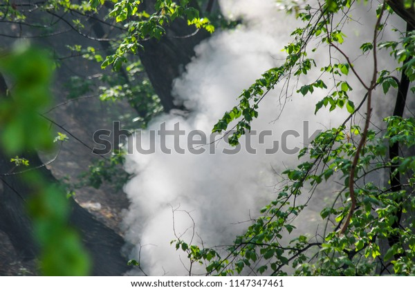 A big dense white cloud of smoke in the woods