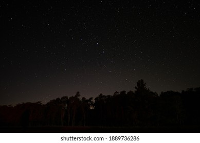The Big Dipper shines in the night sky above the tree line. Many stars are visible on this clear night.