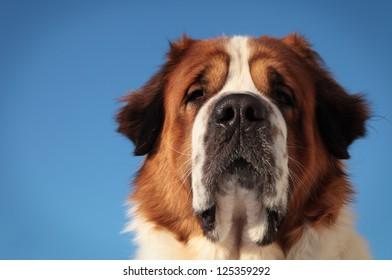 big dog on a background of blue sky