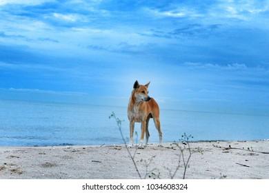 Big dog on the beach