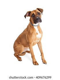 Big dog with sad and lonely expression isolated on white
