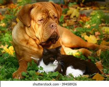 Big dog and small cat.