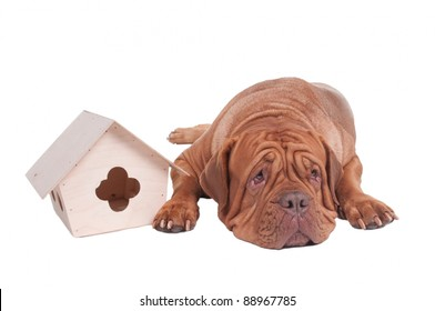 Big dog with small house isolated