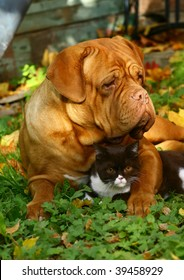 Big dog and small kitten against autumn foliage.