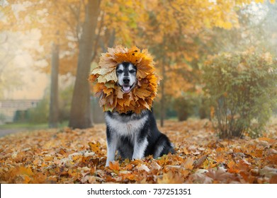 big dog with a wreath of leaves on the head