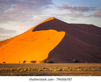 Big dune at sunrise looking impressive with comparatively small trees in the foreground - Shutterstock ID 796506787